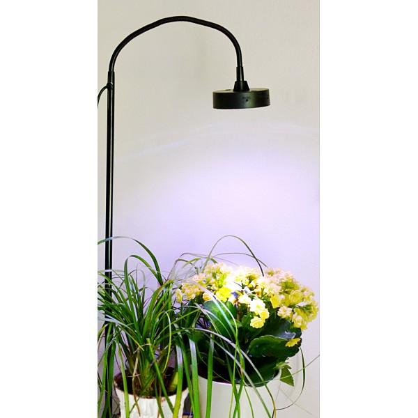 lampe pour plante jardilampe. Black Bedroom Furniture Sets. Home Design Ideas