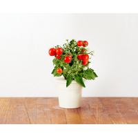 Recharge de graines pour Smart Herb Garden
