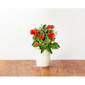 http://www.jardinageinterieur.fr/130-584-thickbox_default/recharge-de-graines-pour-smart-herb-garden.jpg