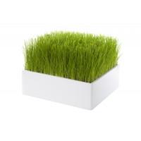 Carré de verdure design - gazon