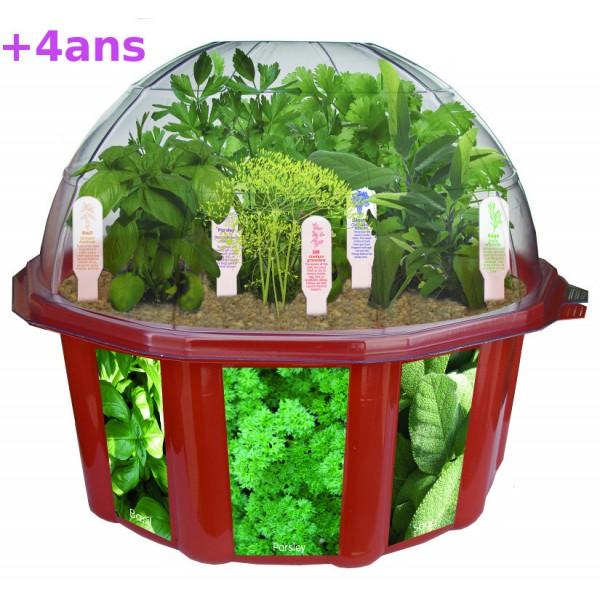 Potager pour les enfants - Kit plante aromatique interieur ...