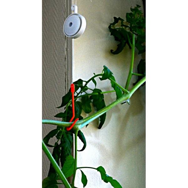 Tuteur yoyou enrouleur - Tuteur tomate avec ficelle ...