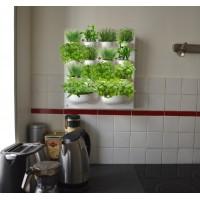 Mur de plantes aromatiques